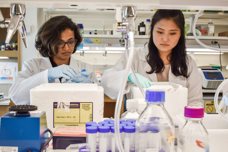 Agathocleous lab members working on the project. L-R: Swetha Mahesula, M.S., Research Associate and Sojeong Jun, Ph.D. Student