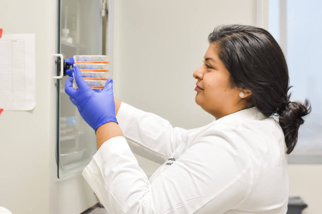 Grad student Divya Bezwada taking cells our of incubator