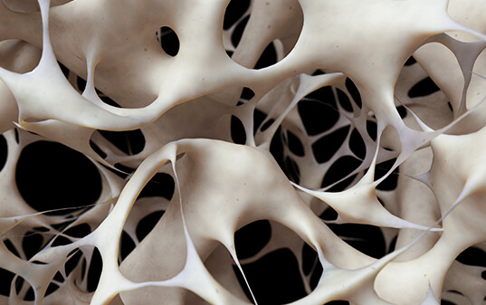 New bone-forming growth factor, Osteolectin (Clec11a), which reverses osteoporosis in mice and has the potential to promote bone regeneration, discovered.
